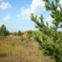 Юный лес :: Стас Борискин (Stanisbor)