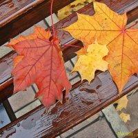 Прощание с осенью :: Лидия (naum.lidiya)