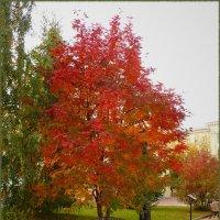 Яркое деревцо :: Ольга Гавриленко