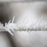 Снежный лёд :: Valentina Zaytseva