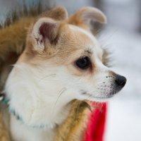 Собачий взгляд :: Valentina Zaytseva