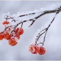 Волшебство природы!!! :: Наталия Лисунова