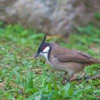 Птицы парков Гонконга :: Анатолий Иргл