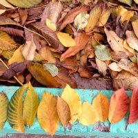осенние краски :: Ekaterina S