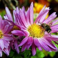 декабрьская пчела :: Александр Корчемный