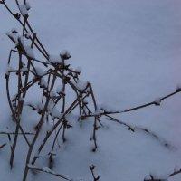 Почти снежный паук... :) :: Любовь К.