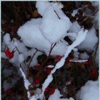 """""""Снежный зайка"""" спрятался в шиповнике.... :) :: Любовь К."""