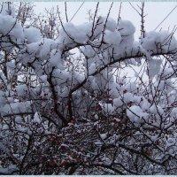 Снежные подушки на макушках... :) :: Любовь К.