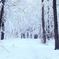 Снег в лесу :: Ярослав Адамов