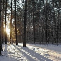 Утренних лучей морозный зной... :: Лесо-Вед (Баранов)