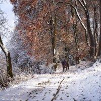 в зимнем лесу :: Elena Wymann