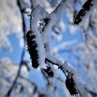 Мороз :: Прима Игорь Кондратьевич