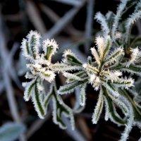 Первый привет от зимы :: Ольга Голубева