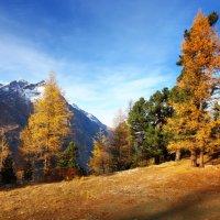 Зелень, золото, багрянец — Словно пятна... :: Elena Wymann