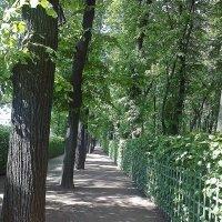 Аллея Летнего сада. :: Виктор Егорович
