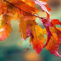 Осенние листья-2 :: Gene Brumer