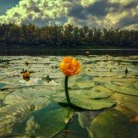 У природы чистое сердце. :: Андрей Лепилин