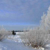 Природа в декабре :: Вера Андреева