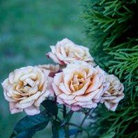 Еще цветочки:) :: Nataly Anderson