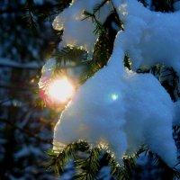 Зимний лес :: олег свирский