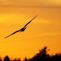 Навстречу закату... :: Анастасия Гаряева