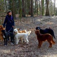 Собаки :: Nina Yudicheva