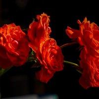Красное и черное :: Павел Руденко
