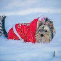 Первый в жизни снег... :: Арина