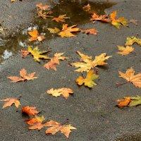 Разбросала Осень листья по асфальту... :: Светлана