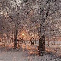 Зимнее утро :: Дмитрий Костоусов