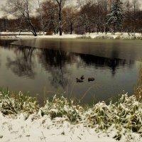 Милая троица на холодном пруду... :: Sergey Gordoff
