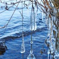 ледяные колокольчики :: Седа Ковтун