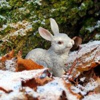 Заяц – зверь в лесах не редкий,только прячется под веткой..:) :: Андрей Заломленков