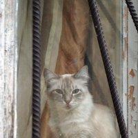 Кошка на окошке. :: сергей лебедев