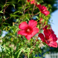 Южный цветок :: Татьяна Абдурахманова