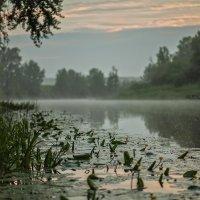 Тихое утро... :: Александр Кутненко