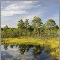 В ясный день на болоте 7 :: Jossif Braschinsky