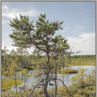 В ясный день на болоте 6 :: Jossif Braschinsky