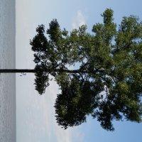 Дерево :: Валерия Иванова