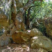 Дерево и камень :: Ирина Приходько