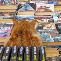 Всему жирному и наглому во мне я обязан книгам. :: Игорь Попов