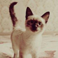 Котик :: Ксения Макаревич