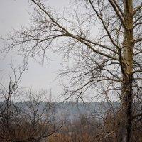туманное утро. апрель :: Светлана Абатурова
