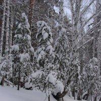 Зима :: Алина Петрова