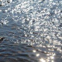 солнечные блики :: Света Чубук