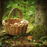 И словно в сказочном лесу...... :: Елена Kазак