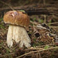 Кто первый гриб нашел в лесу , тому и гриб :) :: Елена Kазак