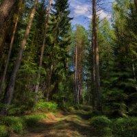Лесные просторы :: Сергей Шабуневич