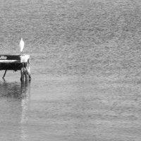 Одиноко :: Кристина Волошина