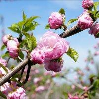 весна пришла :: валентин яблонский